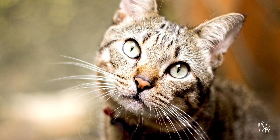 memorias de gatos