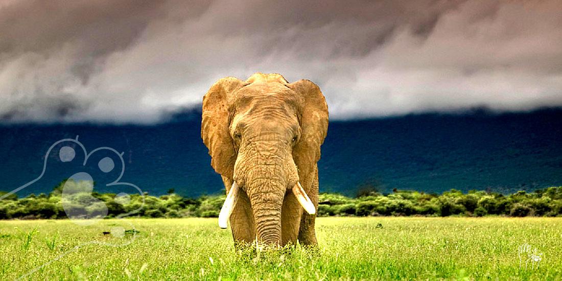 Día del elefante