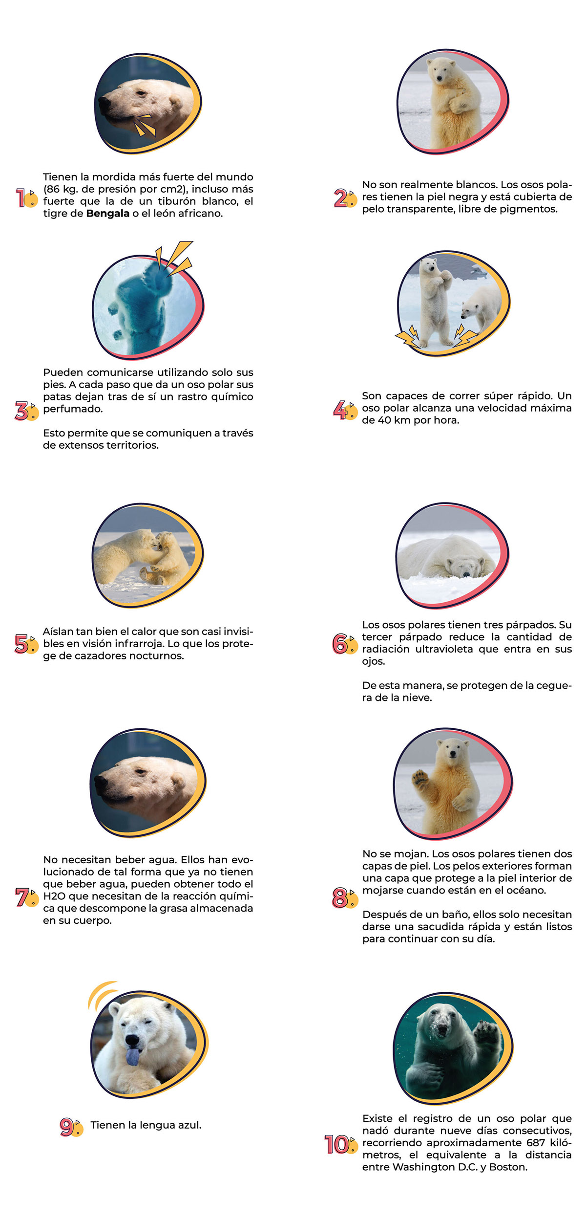 10 datos sorprendentes sobre los osos polares
