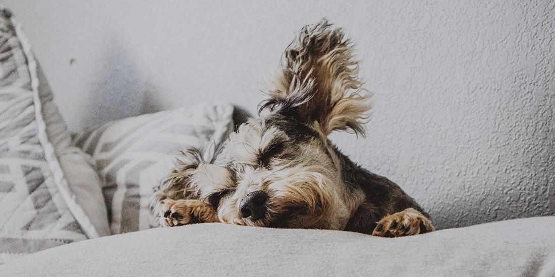 10 horas de música para tu perrito en YouTube