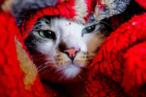 5 causas por las que tu gato puede tener caspa