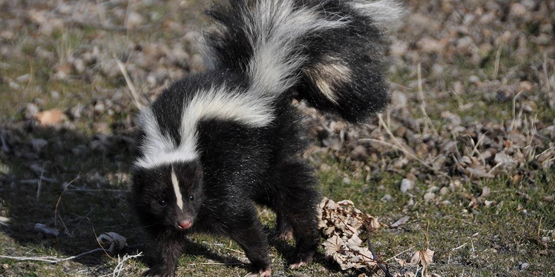 6 animales bebés que aman la primavera