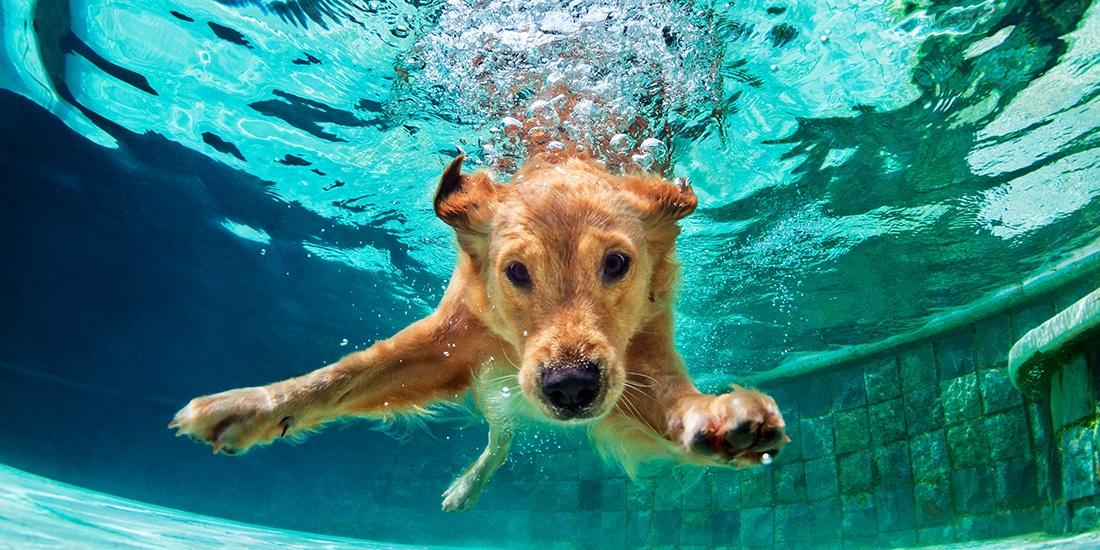 6 consejos para proteger a tu mascotas del calor