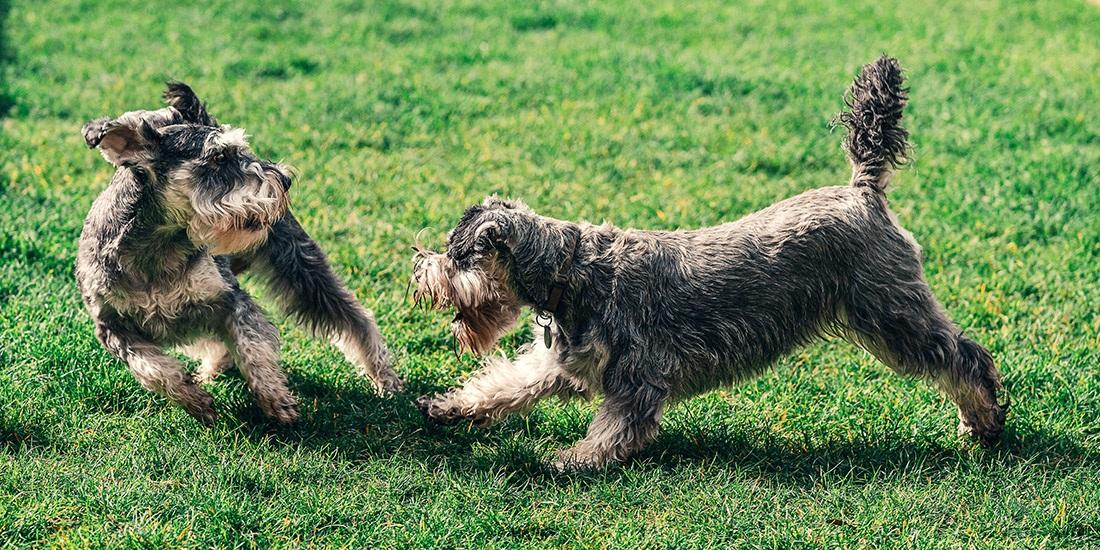 7 errores más comunes al pasear a tu perro