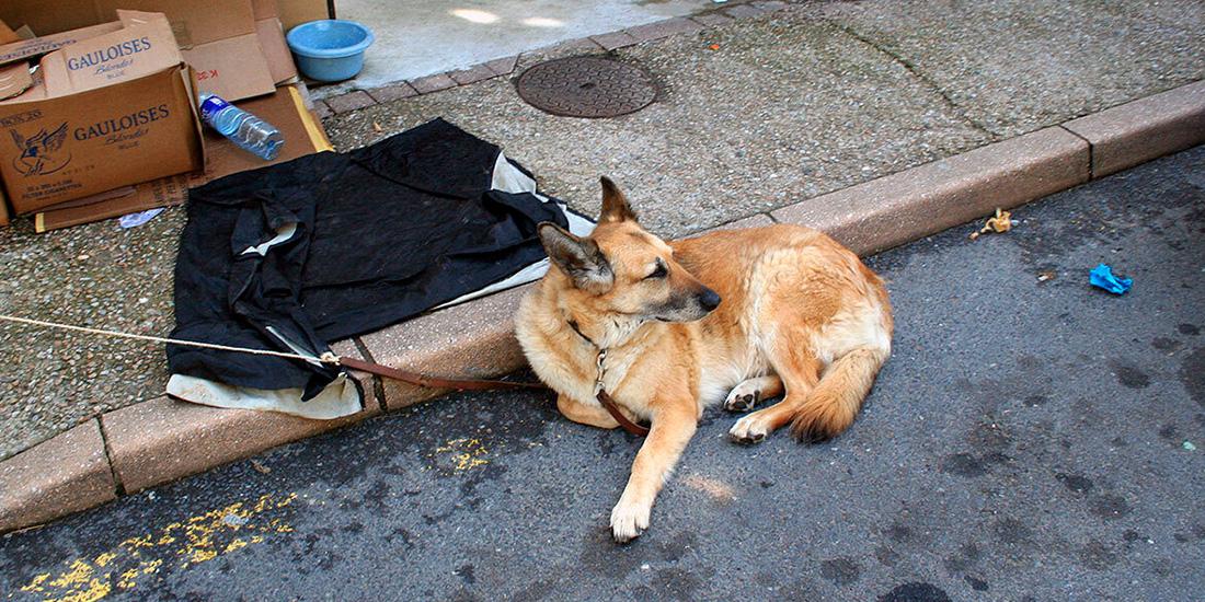 aumenta 25% número de perros abandonados en la pandemia