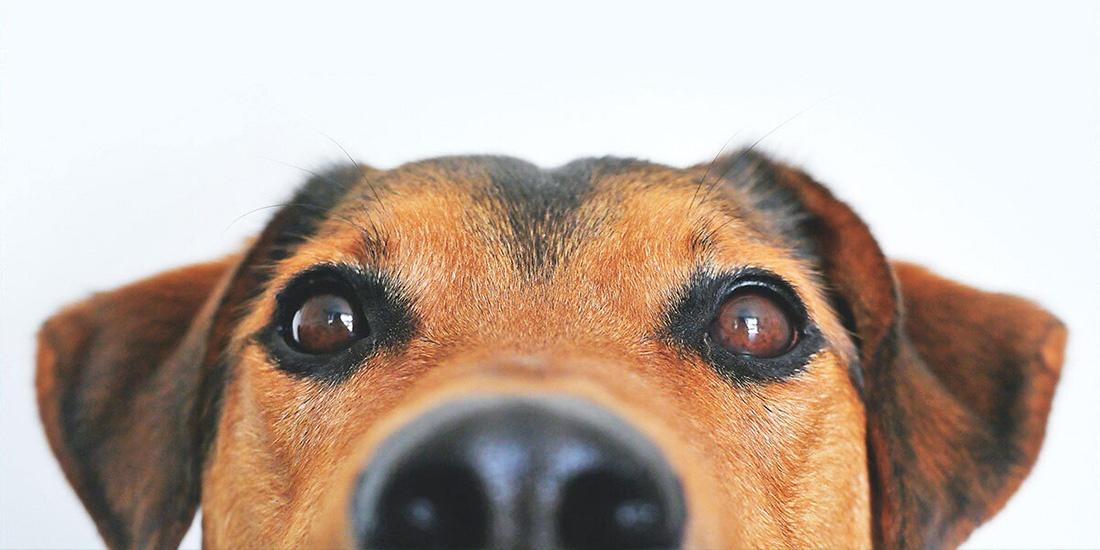 beneficios del aceite de oliva para tu perro