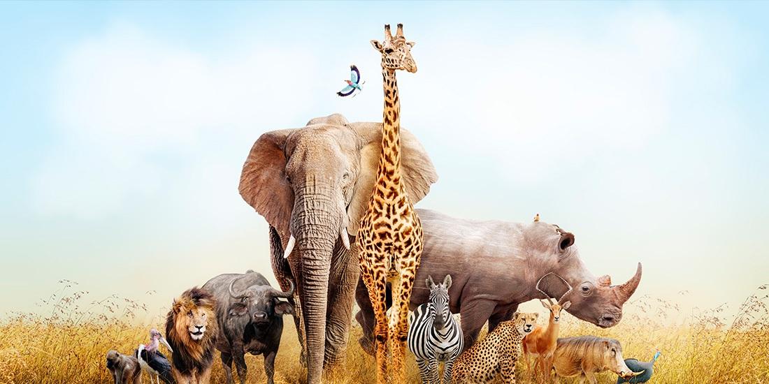charles darwin y el amor por los animales