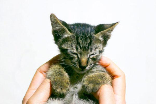 cómo acariciar a tu gato según la ciencia