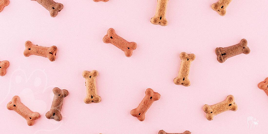 cómo elegir el mejor alimento para perro