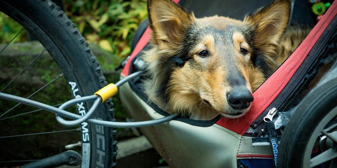 como llevar a mi perro en bicicleta