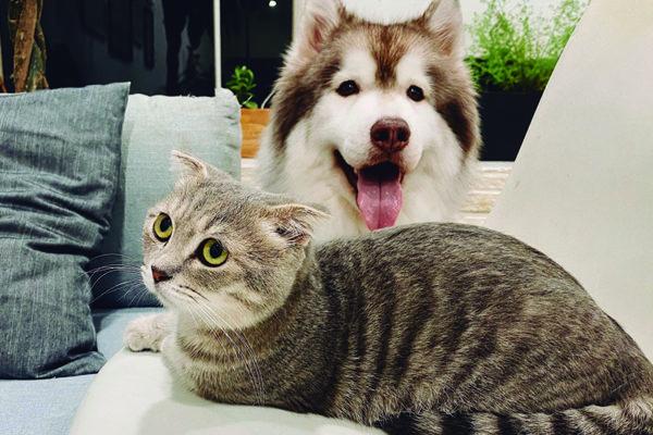 cómo proteger a tu mascota del frío