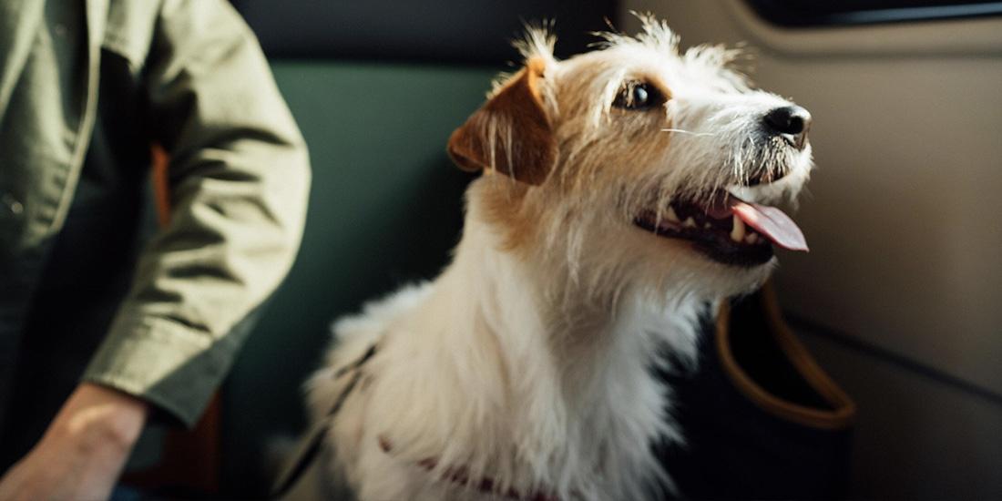 cómo viajar con mascotas en las aerolíneas mexicanas