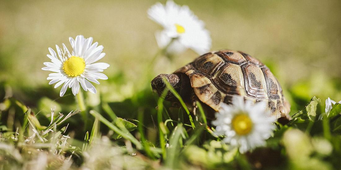 consejos esenciales para cuidar a tu tortuga