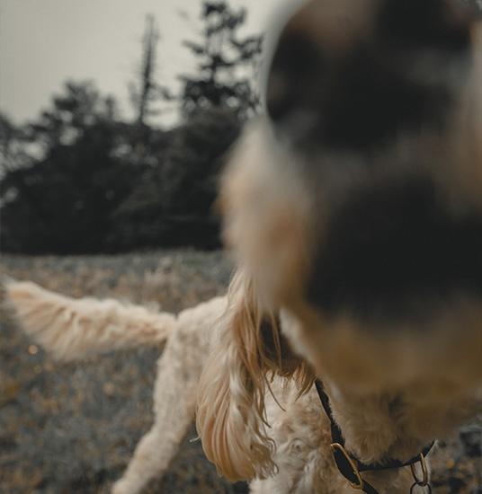 cosas que los perros pueden oler y los humanos no