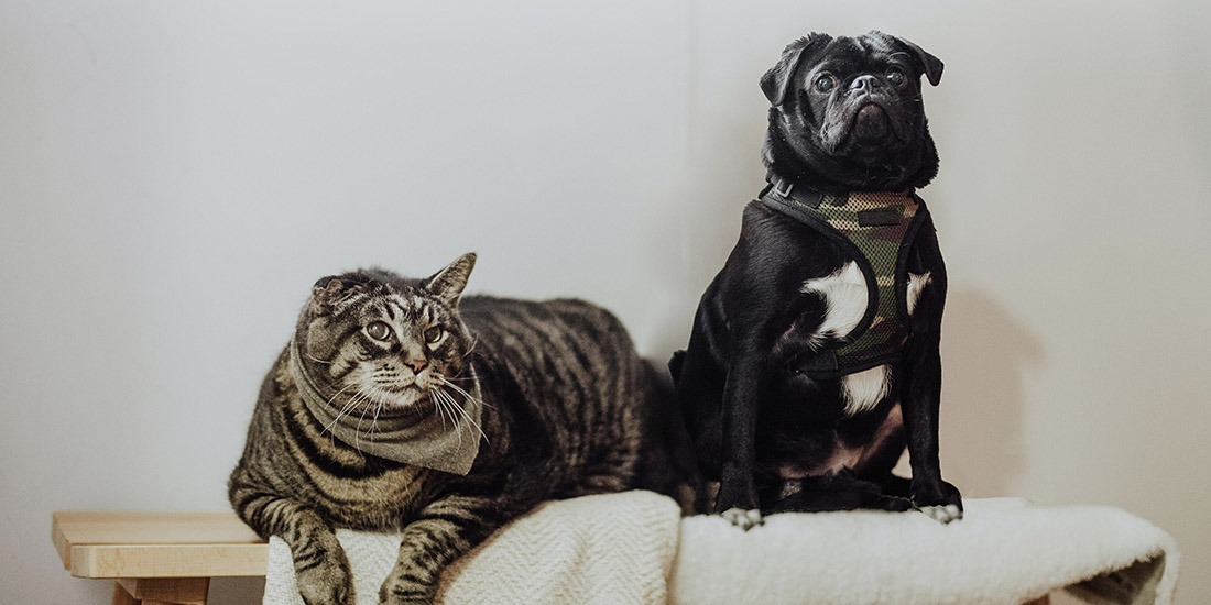 cuánto cuesta un seguro de mascotas en méxico y qué cubre