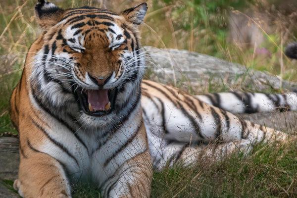 diferencia entre los animales domésticos y salvajes