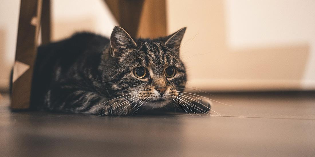 existe la hora del gato loco
