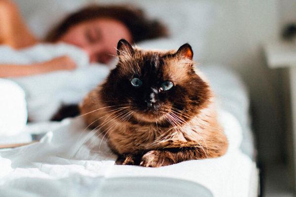 gatos manipulan a las mujeres