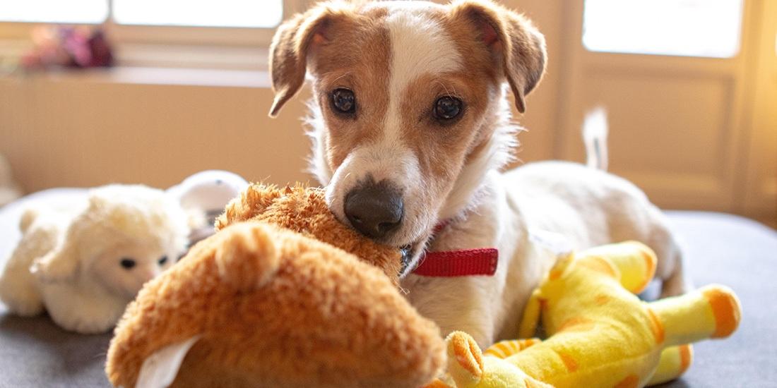 importancia de conocer el reloj biológico de tu perro