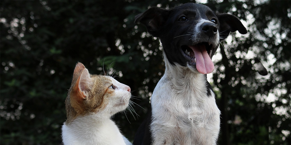 importancia de esterilizar a tu mascota
