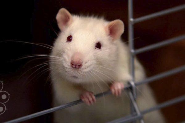 eliminar para siempre el testing en animales