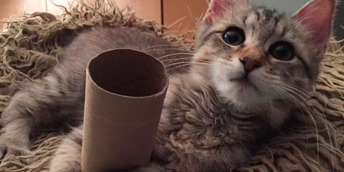juegos caseros de inteligencia para tu gato