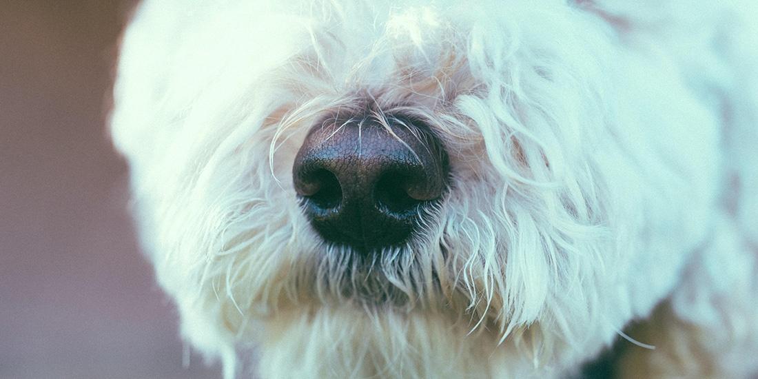 juegos de olfato para tu perro