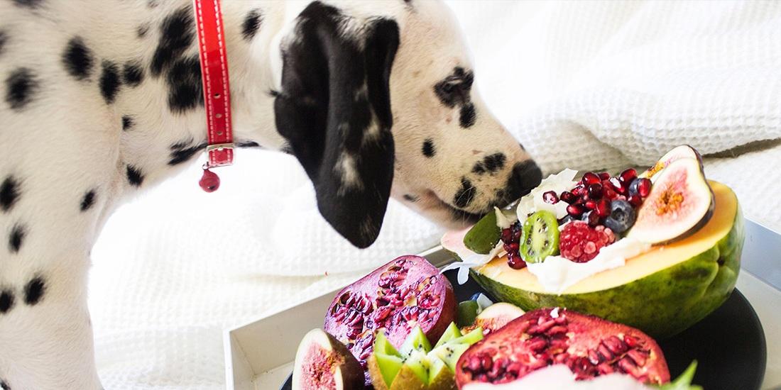 mi perro puede comer verduras