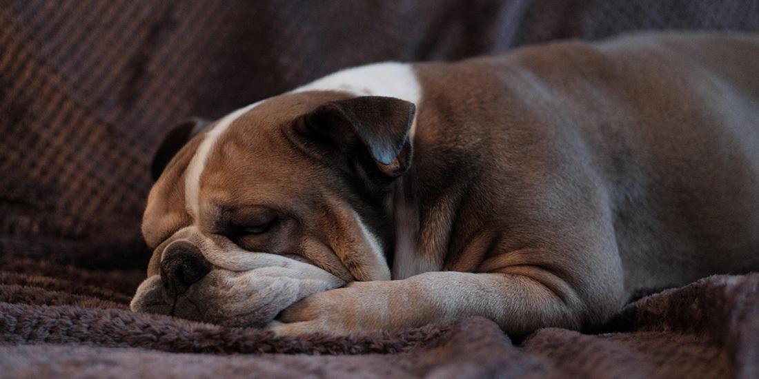 mitos sobre dormir con tu perro
