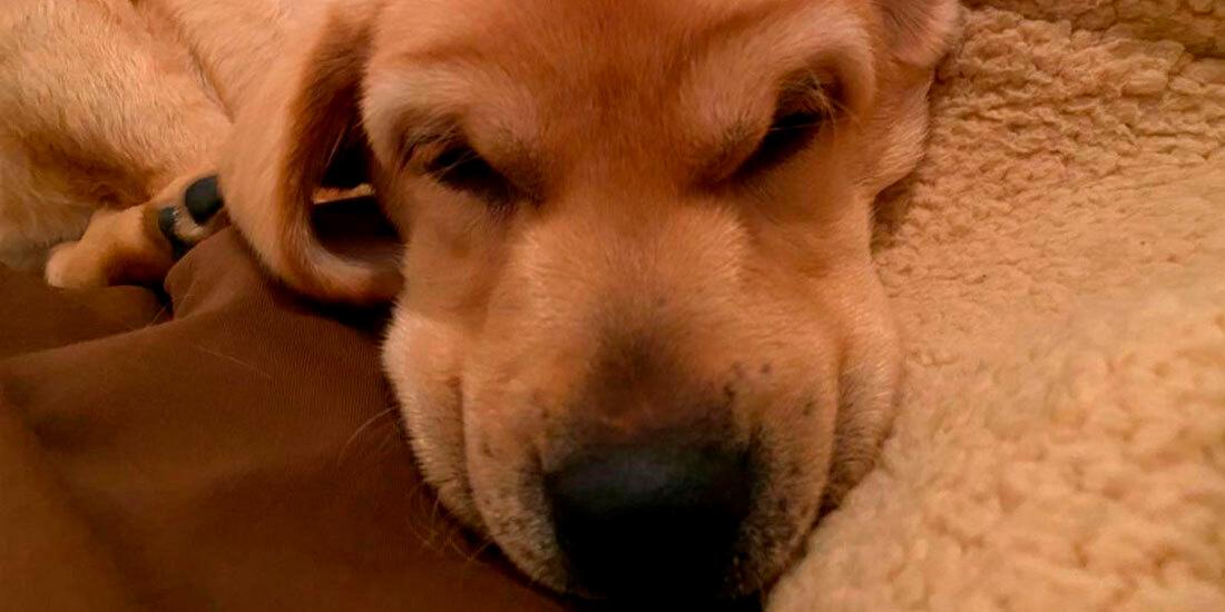 nombres más populares para perros