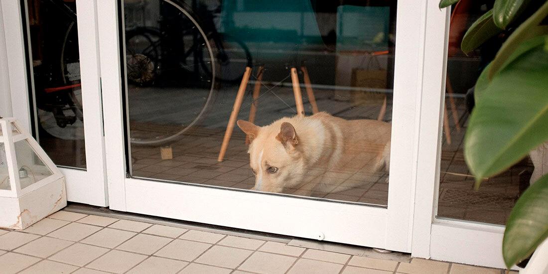 nueva normalidad para las mascotas