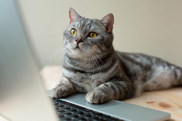 por qué a los gatos les gustan las computadoras