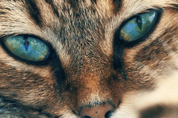 por qué les brillan los ojos a los gatos en la oscuridad