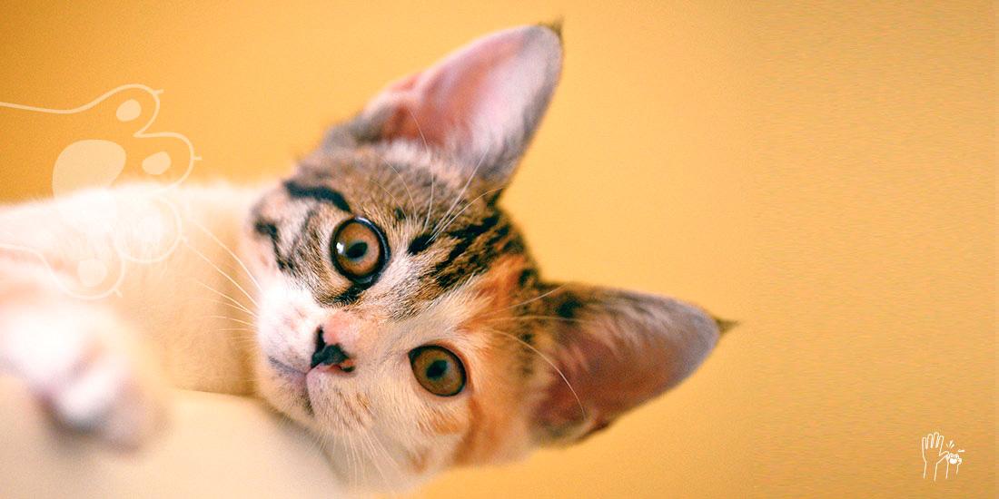 gatos actuan raro