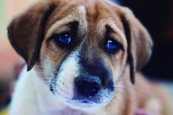 por qué mi perro llora cuando saldo de casa