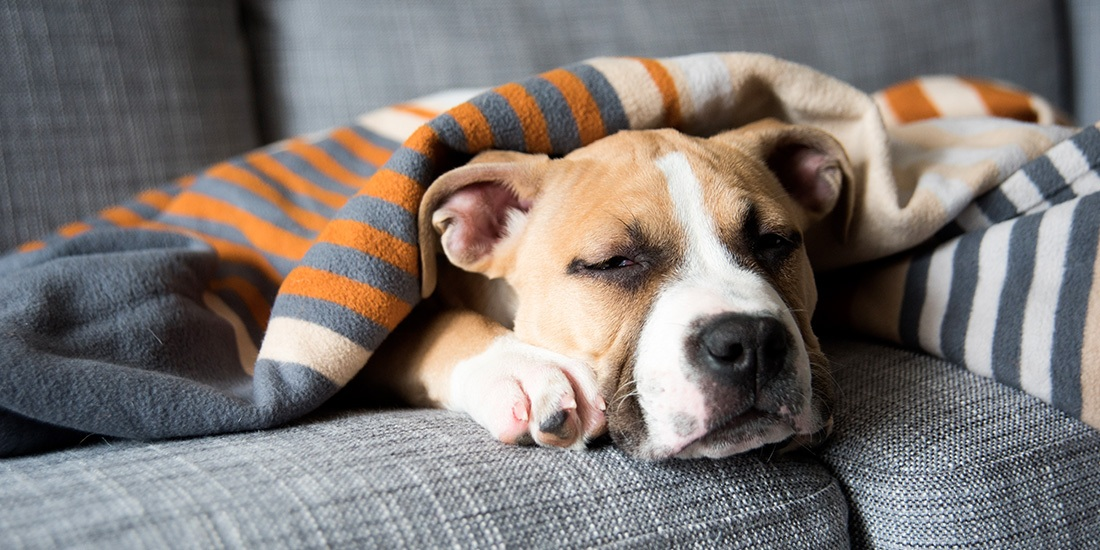 primeros auxilios para perros
