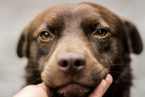 qué significa la mirada de un perro