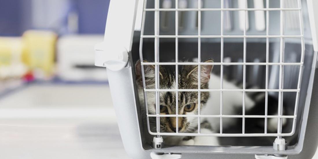 tips para llevar a tu gato al veterinario