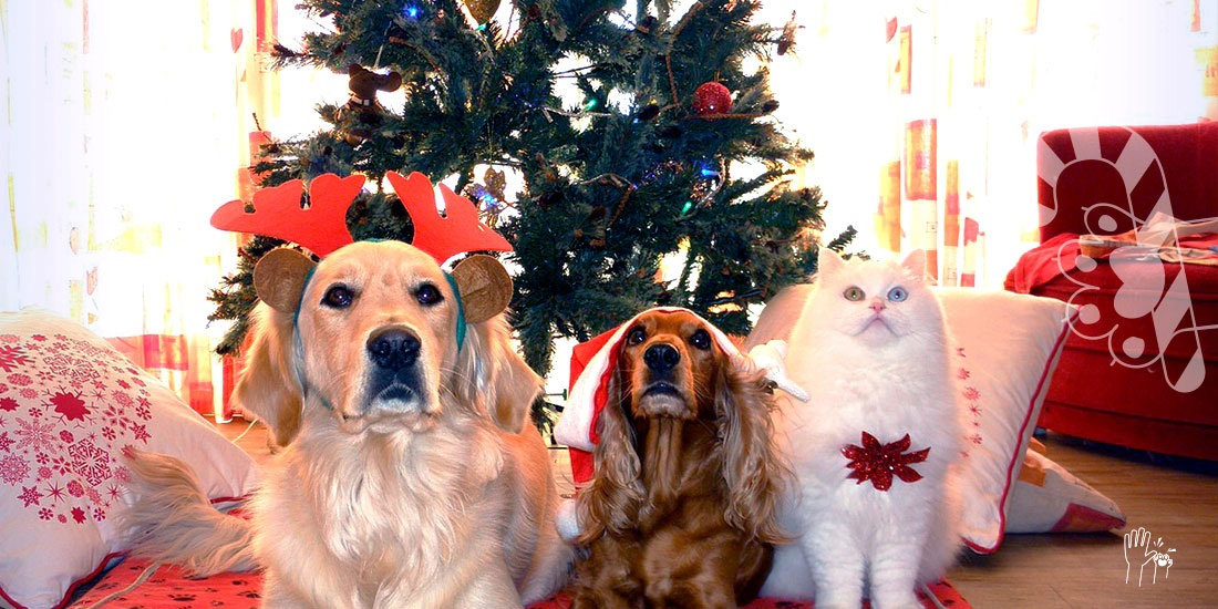ideas de regalos navideños para mascotas