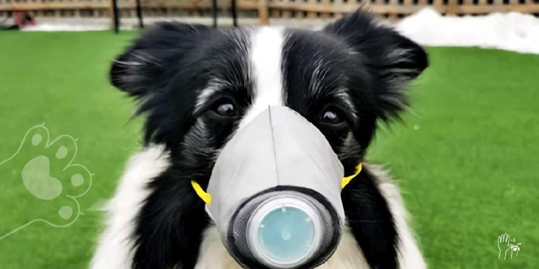 pánico por coronavirus aumenta abandono de animales