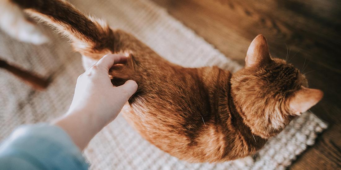 7 cosas que tu gato sabe de ti