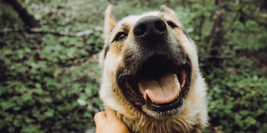 beneficios de las verduras al vapor para tu perro