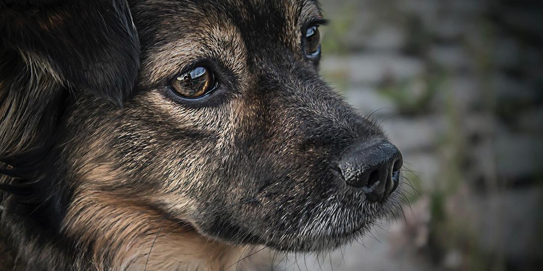 por que los perros se vuelven agresivos
