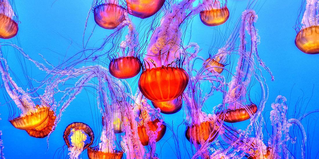 10 curiosidades sobre las medusas
