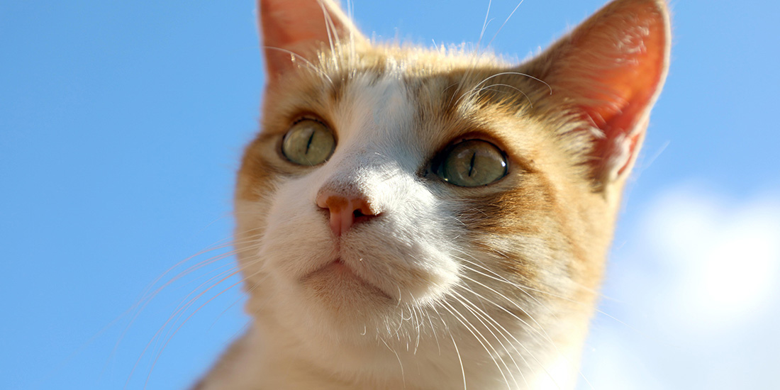 los gatos cambian de color al crecer