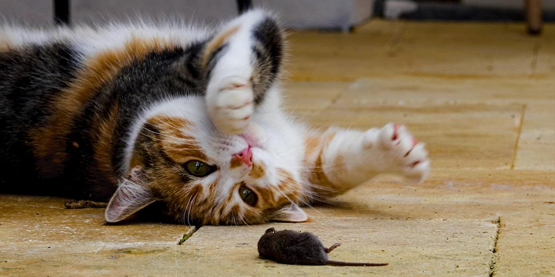 importancia de la desparasitación en gatos