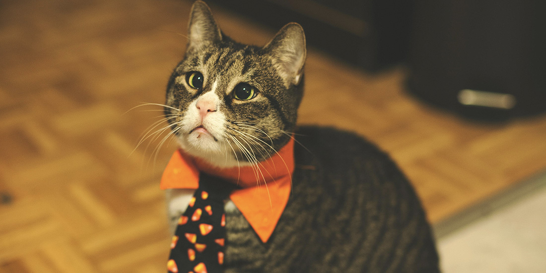 disfrazo mi mascota este halloween
